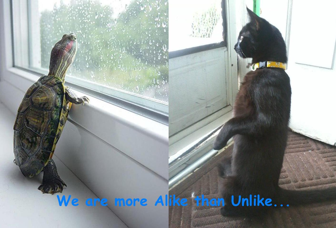 Alike unlike