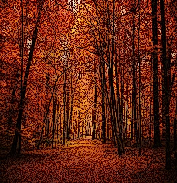 autumn woods adjusted